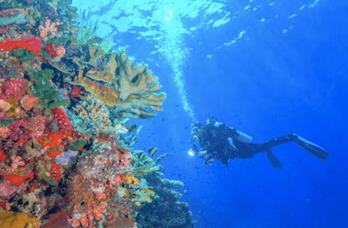 マナドのダイビングの画像