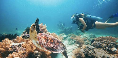 ギリ島のダイビングの画像