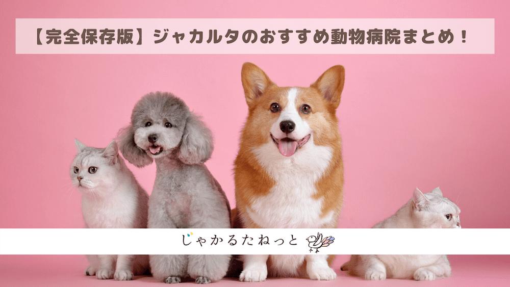【完全保存版】ジャカルタのおすすめ動物病院まとめ!